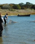 A Day in the Life of the Peconic Estuary