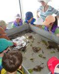 PB wk I with trawl net animals newsletter